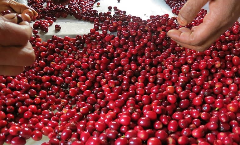Overview of Coffee Production in Nepal